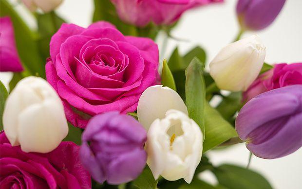 Рослини, які є вдома впливають на настрій господаря, і на його стан здоров'я також.