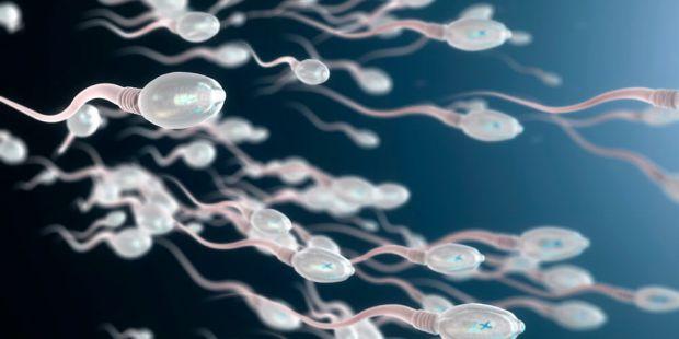 8371_spermatozoidi.jpg (26.94 Kb)