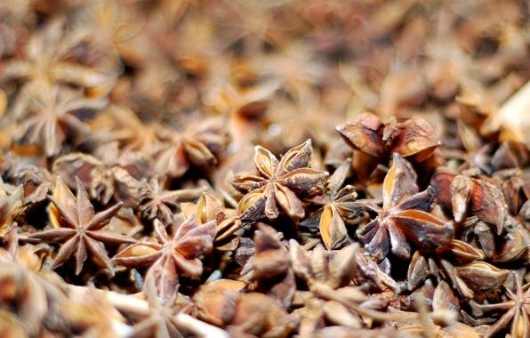 Традиційна медицина каже, що кардамон може вилікувати будь-які хвороби.