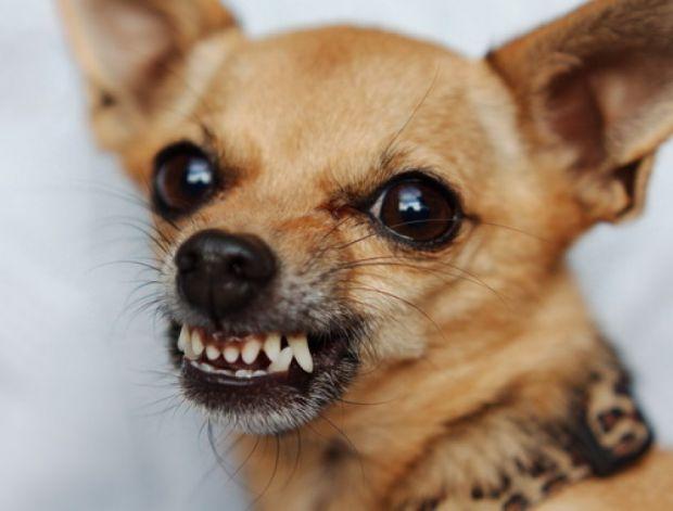 Якщо в цьому питанні звернутися до статистики, то найчастіше собаки кусають не дорослих, а саме дітей.