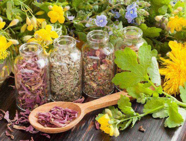 Трави, які допоможуть при вегетосудинній дистонії.