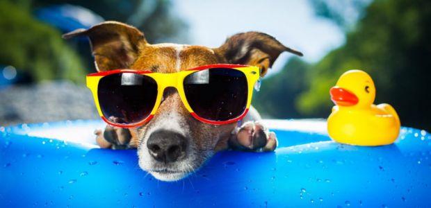 Як врятуватися від спеки: з найспекотніших країн світу спеціалісти дали рекомендації.
