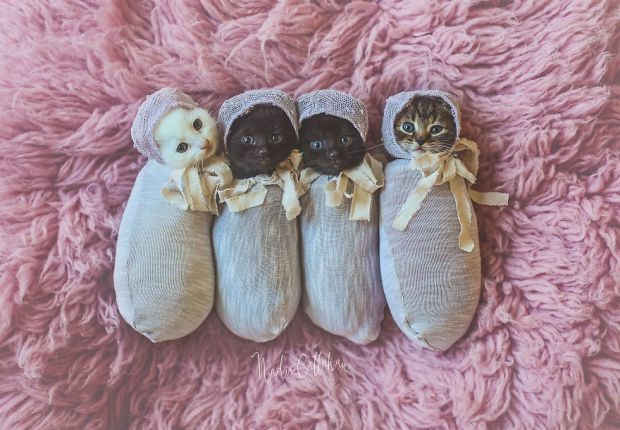 9083_love-taking-photos-of-my-little-girl-with-her-quadruplets-596d4ca593301-png__880.jpg (62.4 Kb)