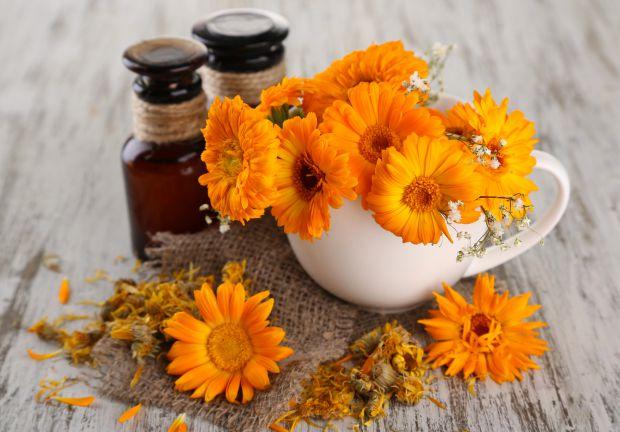 Календула - квітка, яка допоможе при різних захворюваннях.