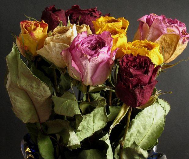 Засохлі квіти негативно впливають на людину.