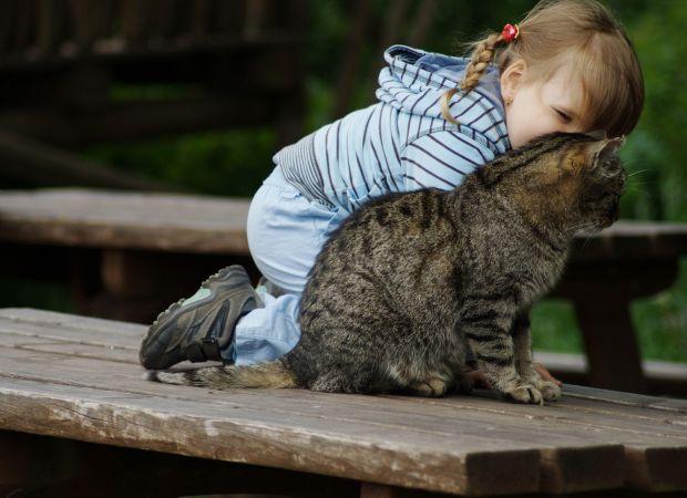 Коти корисніКоти - цілителі, так переконані медики.