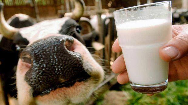 Цілющі властивості коров'ячого молока доведені сучасними вченими. Давайте розглянемо, яке ще молоко є корисним.