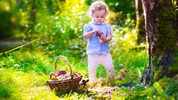 Чи можна дітям їсти гриби, які саме і від скількох років? Читайте у матеріалі.