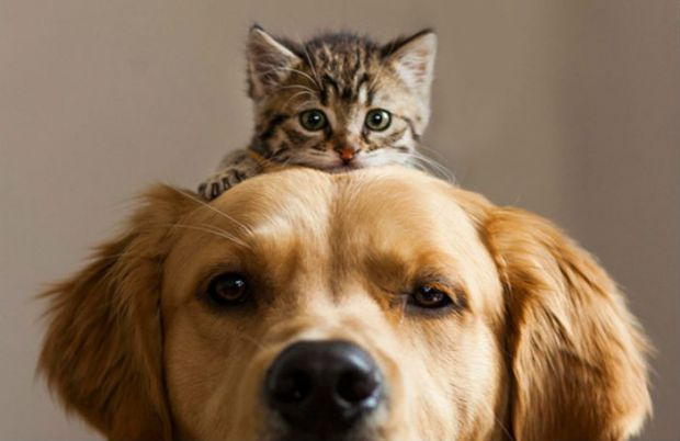 9909_cat-and-dog-friends-001.jpg (28.22 Kb)