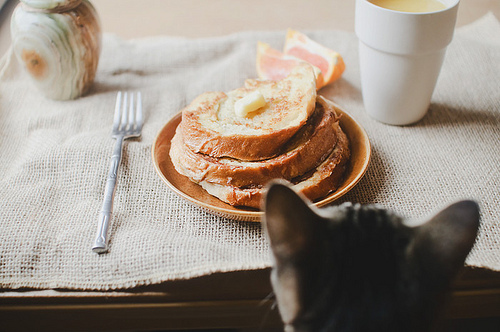 animal-bread-breakfast-cat-cute-favim_com-437173.jpg