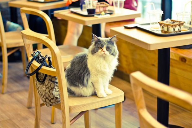 cat_cafe_cnt_21feb13_flickr_ceruleansky_b_646x430.jpg