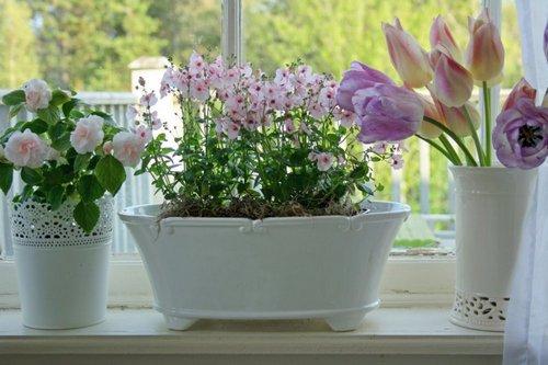 cvety-na-podokonnike-12.jpg