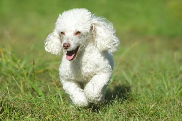 Ось які собаки можуть стати чудовими друзями для вашої дитини! Повідомляє сайт Наша мама.