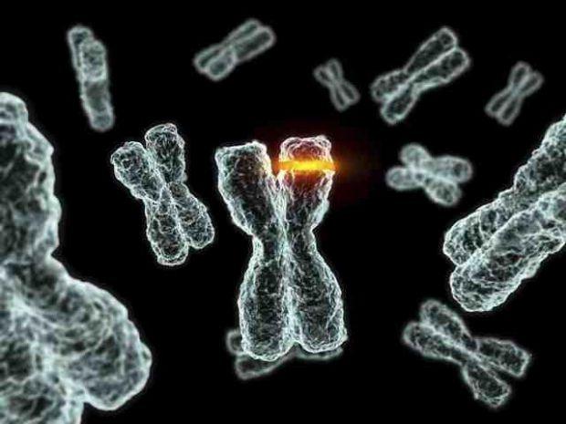 Американські науковці говорять про те, що в майбутньому можлива поява методики, що дозволяє обійтися без Y-хромосоми під час запліднення.