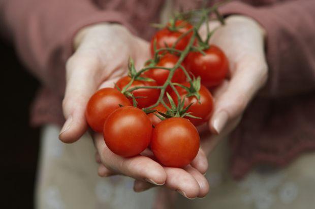 Смачний помідор допоможе позбутись від зайвих кілогармів! Повідомляє сайт Наша мама.