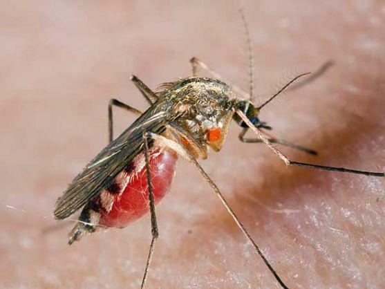 Зараз комарі активізувались. Вони заважають спати вночі, проте це не найгірше. Ці маленькі комашки так кусають, що людина просто впадає в паніку. А що