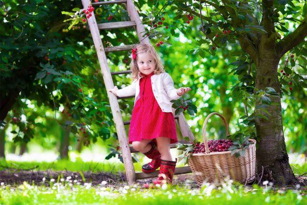 Сьогодні ми спробуємо розібратися наскільки вона корисна для дитячого організму, коли і в якій кількості її краще їсти, і чи є у цієї ягоди протипоказ