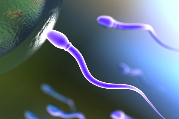 spermatozoid.jpg