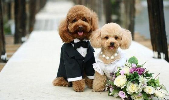 На це весілля було витрачено близько 190 тисяч доларів і воно потрапило до Книги рекордів Гіннеса. Церемонія проводилась у нью-йоркському готелі Jumei
